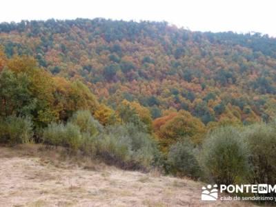 El Castañar de El Tiemblo, rutas desde madrid senderismo; micologia madrid